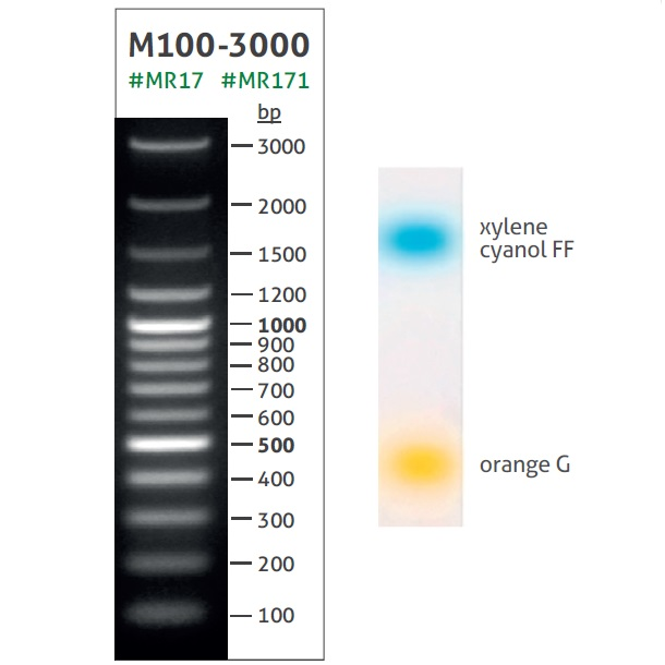 DNA Ladder M100-3000