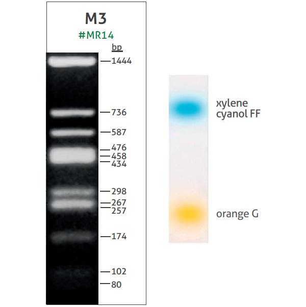 M3 DNA Ladder (11-1444 bp)