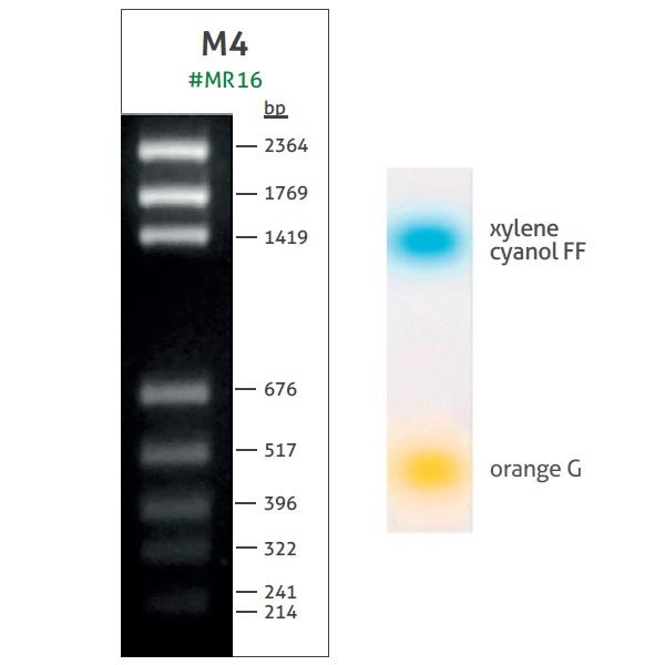 M4 DNA Ladder (65-2364 bp)