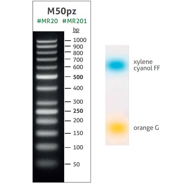 DNA Ladder M50pz