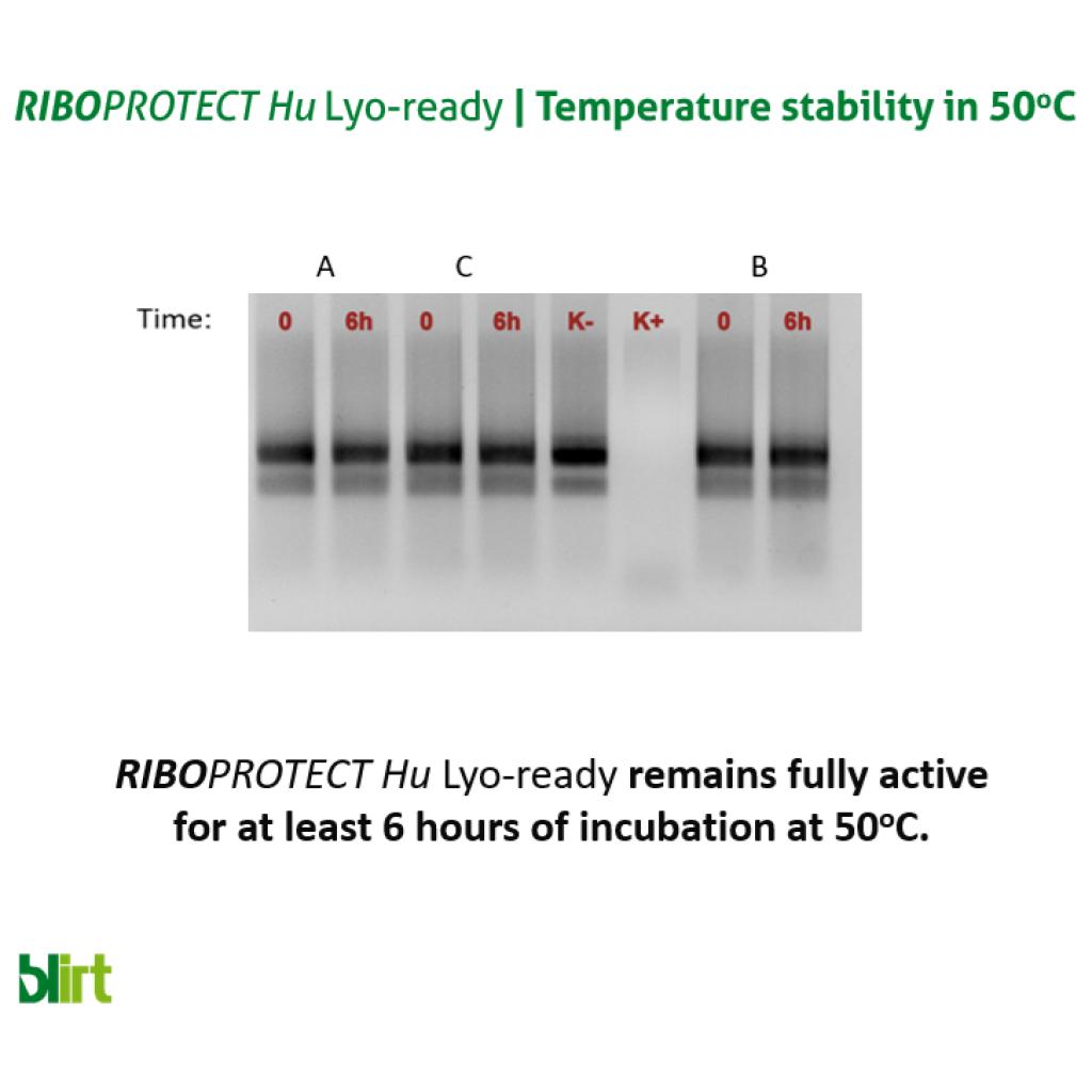 RIBOPROTECT Hu RNase Inhibitor Lyo-Ready